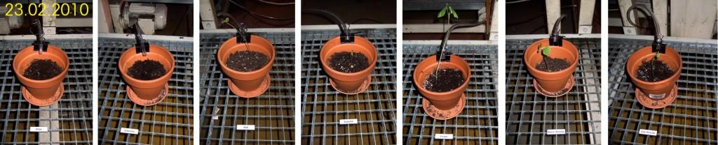 23-02-2010 plant growth